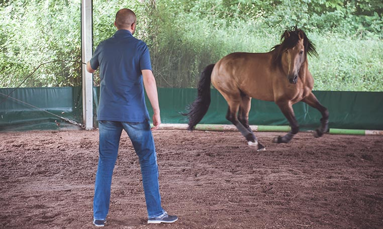drive in motion PS meets PS - live Leadership mit Pferden, Training im Zelt