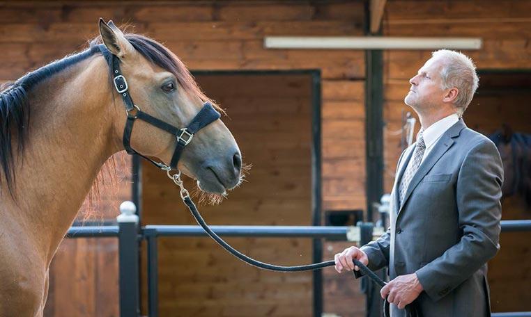 drive in motion PS meets PS - live Leadership mit Pferden, Führungskräftetraining